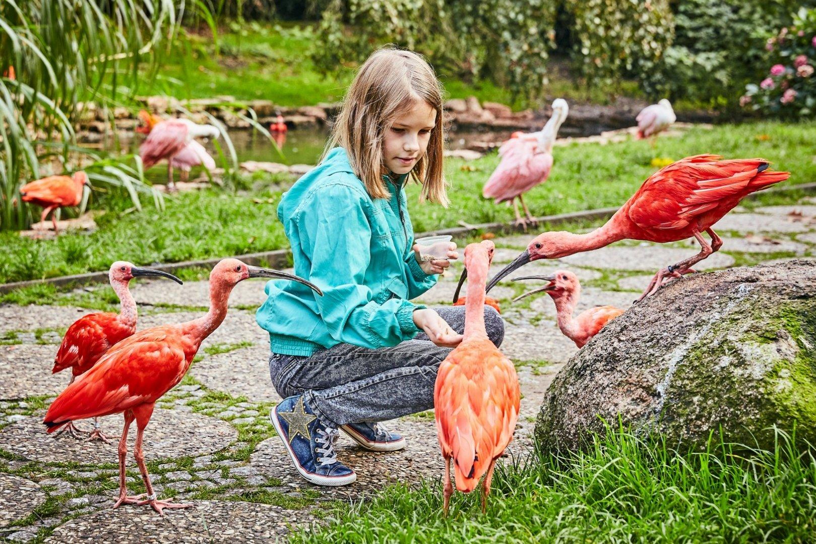 Weltvogelpark Walsrode in 29664 Walsrofe