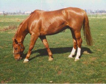 Tierarztpraxis Daniels in 22885 Barsbüttel